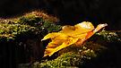 auf dem Moos des Herbstwaldes