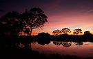 Kurz vor der Nacht im Pantanal