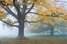 Markante Bäume im Herbstnebel