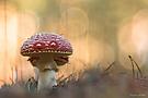Die Augen im Pilz...