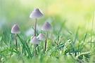 eine kleine Pilzfamilie