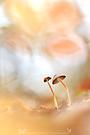 Schwammerl im Herbstwald