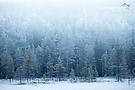 Nebel und Frost