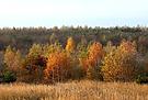 Herbststimmung in Brandenburg