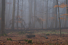 Schorfheide - Wald