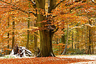 Mein letztes Herbstbild..