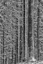 Winterlinien