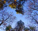 Abschied vom Herbst