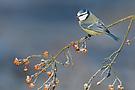Allerweltsvogel 3