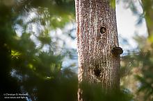 Der Baum hat Augen