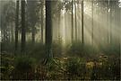 Wald mit Nebel mag ich - mit Strahlen noch viel mehr