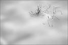 Im Schnee versunken