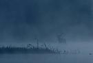 Nebelhirsch