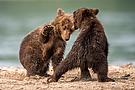 Bärenkindergarten