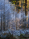 Kalt-Warm im Wald