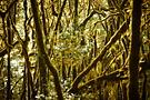 Im Wunderwald