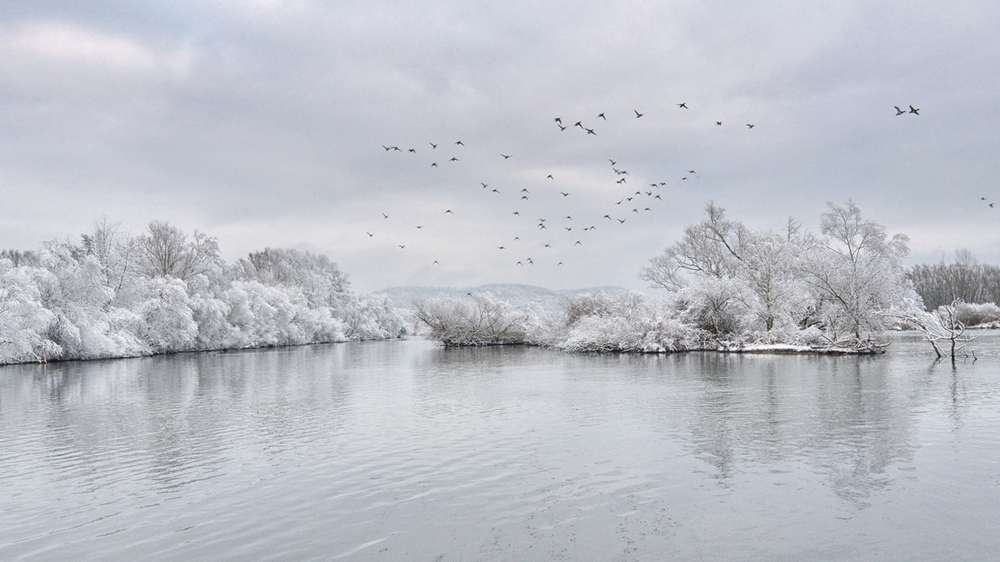 Winter an der Donau