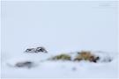 Im Schnee ...