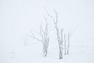 Nebel & Schnee...