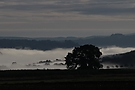 Früher Nebelmorgen im Elbsandsteingebirge