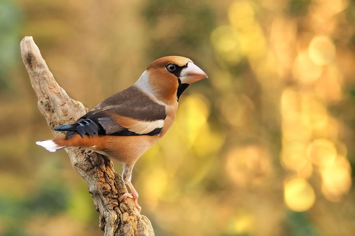 Ein Bild Aus Besseren Tagen Forum Für Naturfotografen