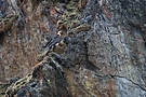 Leben in der Felswand