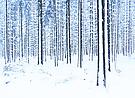 Ein Wald voller Schneestangen