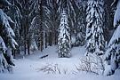 Weißer Schwarzwald