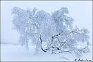 Winterwonderland im Hohen Venn