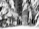 Vier mittige Standhafte im Schnee