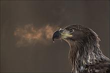 Adlerprtrait