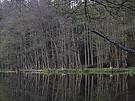 Kleiner See mit Biberspuren