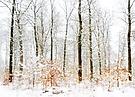 frisch gefallener Schnee