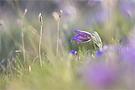 Wuselige Frühlingswiese