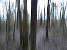 Wisch-Heide-Wald