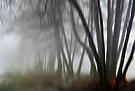 Nebelmorgen Wischer