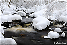An der Hoegne im Winter