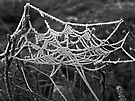 Relaxing in spider`s web ?