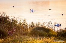 Abends am Teich