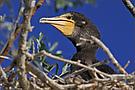 Jungvogel im Nest