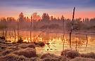 Morgenstimmung im Moor
