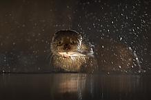 Fisch & Otter