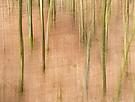 Wald im März