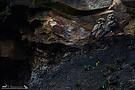 Wächter der Kohle