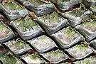 Natursteinpflaster