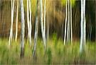 Birken im April gewischt