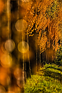Herbstfarben im Frühling?