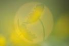 Schattenspiel im Ei