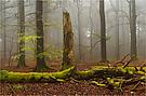 Manchmal kann man den Wald atmen hören.
