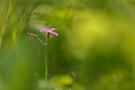 Pinkfarbener Farbtupfer im Wald